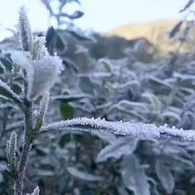 Frost-in-Fujian