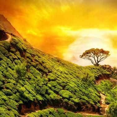 kobu-teeversand-teeblog-31-Indien