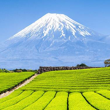 kobu-teeversand-teeblog-32-Japan