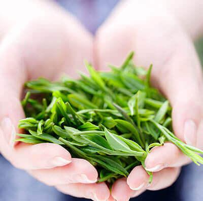 Was ist grüner Tee